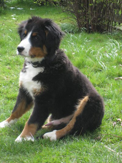 Unser Hund Basti