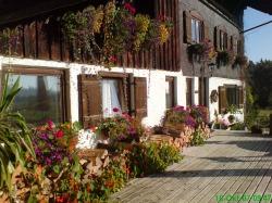 Haus-Blumen