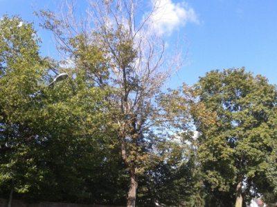 Baum (© Karin Donath : Karin Donath )