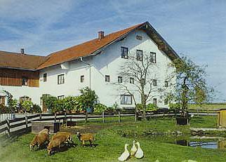 Holzhauser