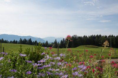 herrlicher Blick auf Wiesen und Berge