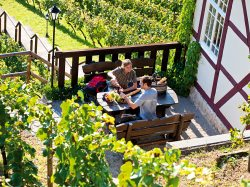 Pause in den Rebstcken des Herzglichen Weinberg