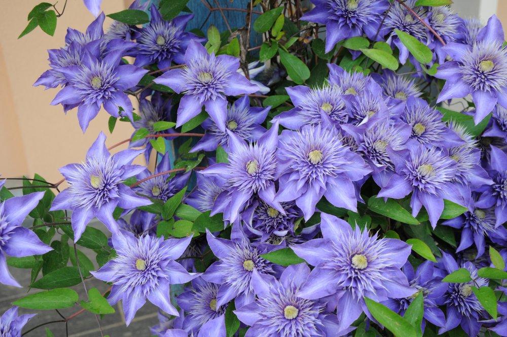 Blütenpracht auf dem Winzerhof