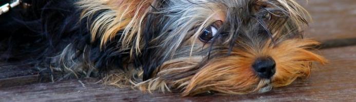 Hund © Alen Yakusheva, Fotolia (© Fotolia : Alen Yakusheva )