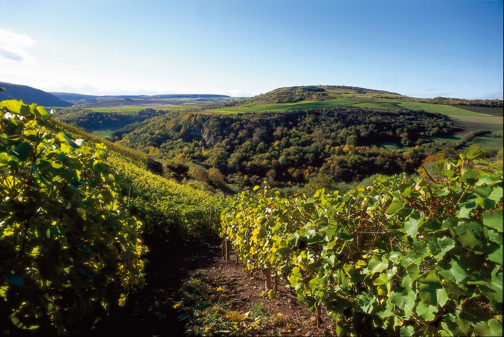 Weinberg in Rheinland-Pfalz (&copy; Weinland Nahe e.V. )