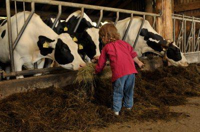 Kind-füttert-Kühe (© Susanne Mölle )