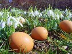 Ostereier auf einer Schneeglöckchenwiese (© pixelio.de : M. Großmann )