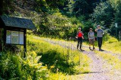 Wandern am Rennsteig (© Regionalverbund Thüringer Wald e.V. : Mike Deichmann )