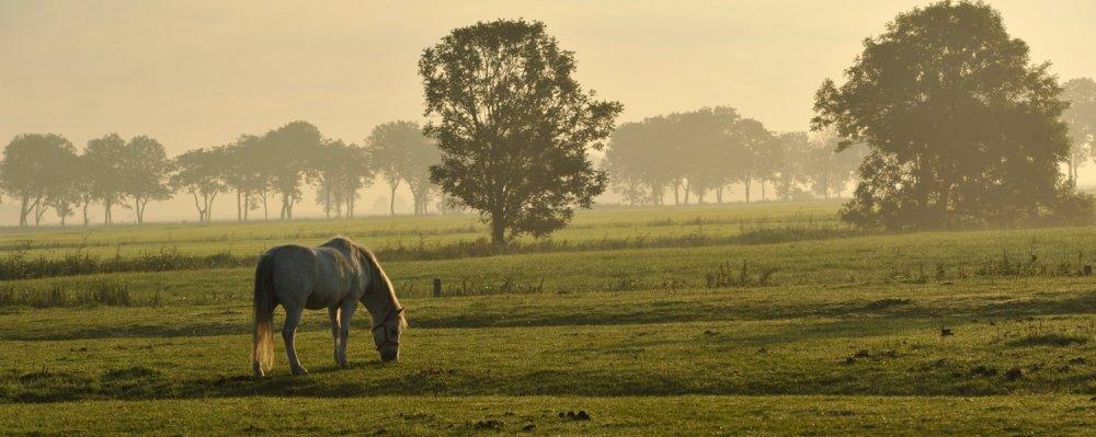 Pferd auf der Weide (© Susanne Mölle )