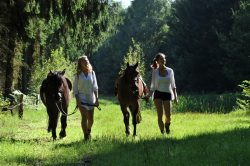 Pferdespaziergang