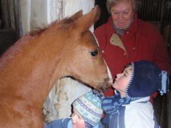 Kinder und Fohlen