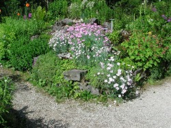Alpengarten in Pfronten-Steinach