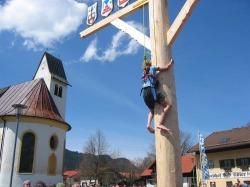 """Maibaum klettern Zum Maibaum geh�rt das """"Herpfen"""". Nur mit einem Seil gesichert erklimmen die mutigen barf��ig und mit eigener K�rperkraft den Baum."""