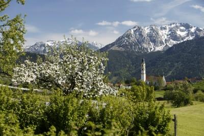 Blühender Apfelbaum (© Pfronten Tourismus/ E. Reiter : Pfronten Tourismus/ E. Reiter )