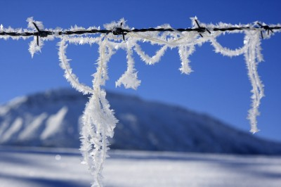 Stacheldraht mit Schneekristallen (&copy; Pfronten Tourismus/ E. Reiter : Pfronten Tourismus/ E. Reiter )