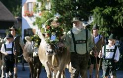 Viehscheid Eintreffen des Kranzrind von der B�renmoos beim Almabtrieb.