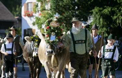 Viehscheid (© Pfronten Tourismus/ E. Reiter : Pfronten Tourismus/ E. Reiter )