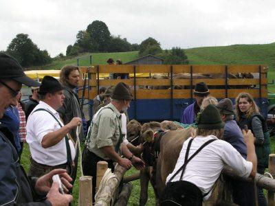 Viehscheid Pfronten-Röfleuten: Kein Download