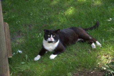 Katzen auf dem Hof