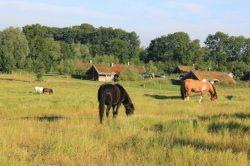 9 Ferienhäuser an der Ponykoppel