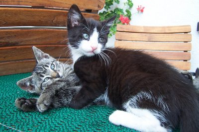 Schmusige Katzen