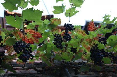 Wein im Innenhof