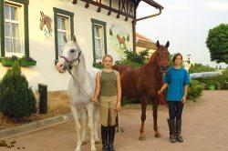 Pferde vor dem Haus