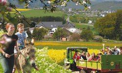 Traktorfahrt und Eselreiten - Grieshof