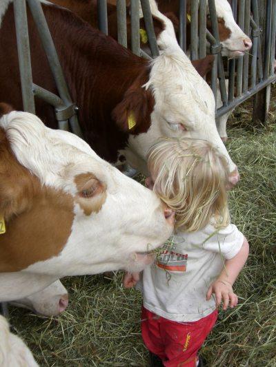 Kind bei Rindern