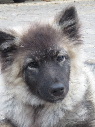 Hofhund Egon