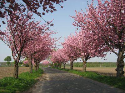 Frühling in Leuth