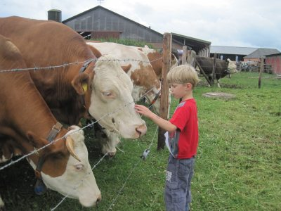 Erster Kontakt zur Kuh