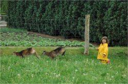 Hirschhof Hildebrandt Urlaub mit Kindern