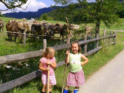 Kühe eintreiben