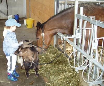 Unser Pferd Monja mit Freund Siegfried der Ziege