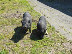 Familienurlaub im Bauernhaus in Brandenburg