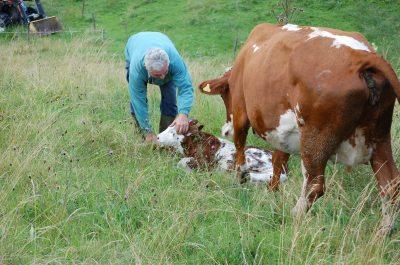 Neugeborenes auf Wiese