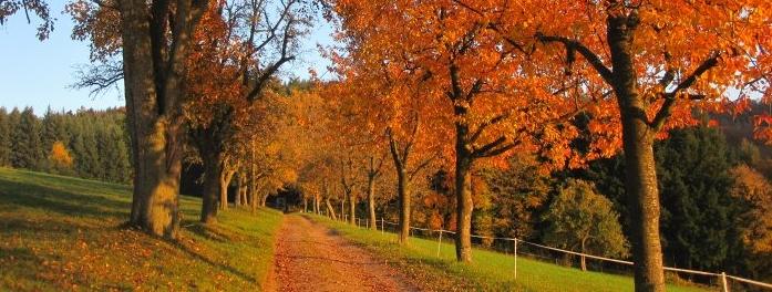 Herbst auf dem Grub-Daniel-Hof