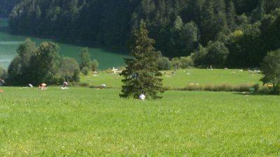 Wiese am Weissensee