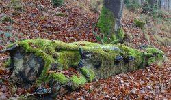Totholz ist ein lebendiger Lebensraum Foto: Fabienne Finkenzeller/Landratsamt Unterallgäu �Totholz ist ein lebendiger Lebensraum Foto: Fabienne Finkenzeller/Landratsamt Unterallg�u