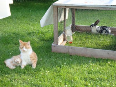 Katze Monti mit Leo