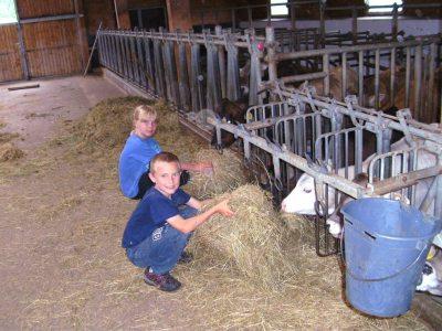 fleißige Helfer beim Füttern