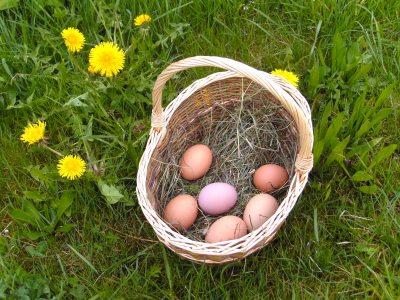 Bio-Eier von glücklichen Hühnern
