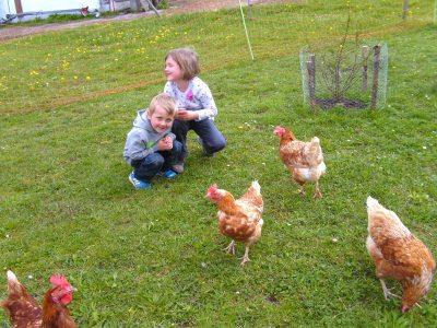 viel Spaß mit unseren Hühnern!