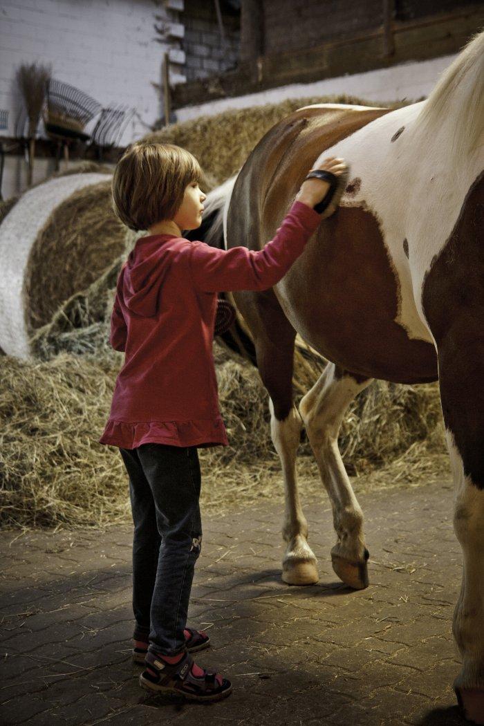 Umgang mit dem Pony lernen