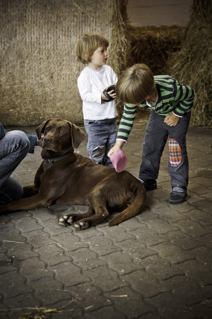 Choco unser Hofhund
