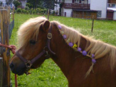 Unser Pony Maxl