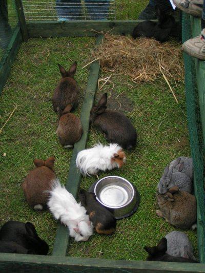 Die Kaninchen und Meerschweine fühlen sich wohl