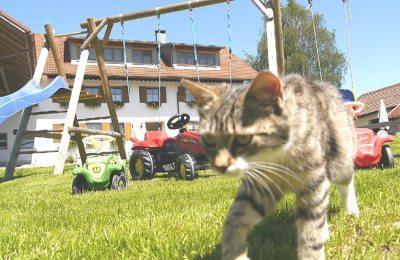 Neugierige Katze auf dem Spielplatz