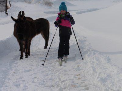 Wintersport für Mensch und Tier